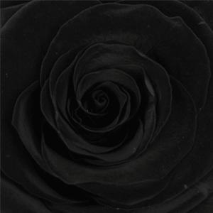 Swatch Black Beauty