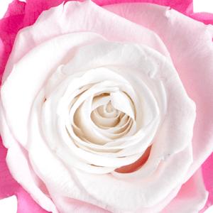 Swatch Cherry Blossom