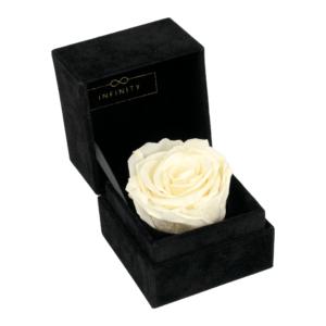 Single Velvet Champagne Produktbild