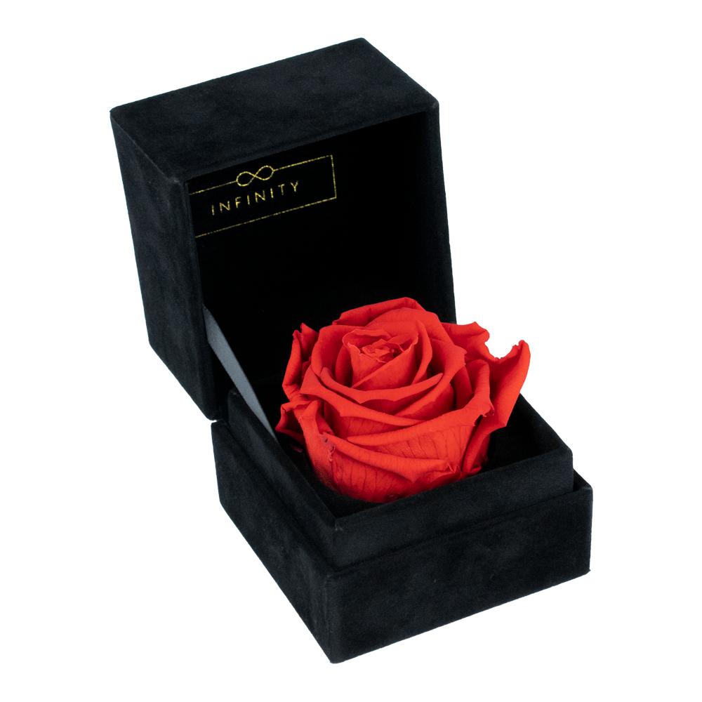 Vibrant Red Single Velvet mit haltbare Rose