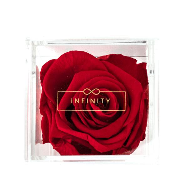 Single Acryl Draufsicht Vibrant Red