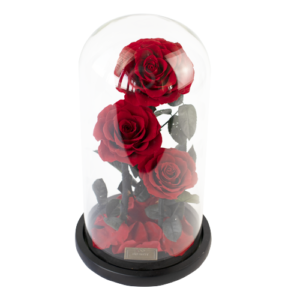 Vibrant Red konservierte Dome Rose die 3 Jahre hält