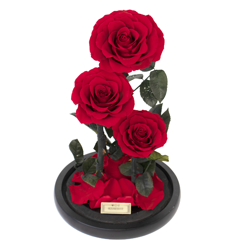Vibrant Red konservierte infinity Rose Dome XL
